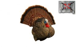 Avian X LCD Strutter Turkey Turkey Decoy