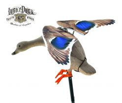 Duck-Decoy-Mallard-Motorized