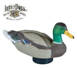 Duck-Decoy-Quiver-Duck